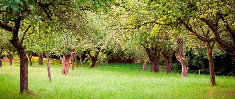eigener Obstgarten